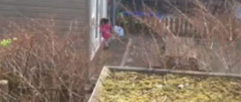 Kinderdagverblijf Flamingo Amsterdam gaat dicht