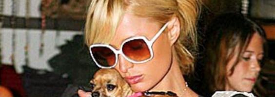Paris Hilton bedroefd om dood hondje