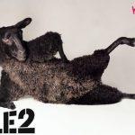 T-Mobile neemt Tele2 Mobiel over